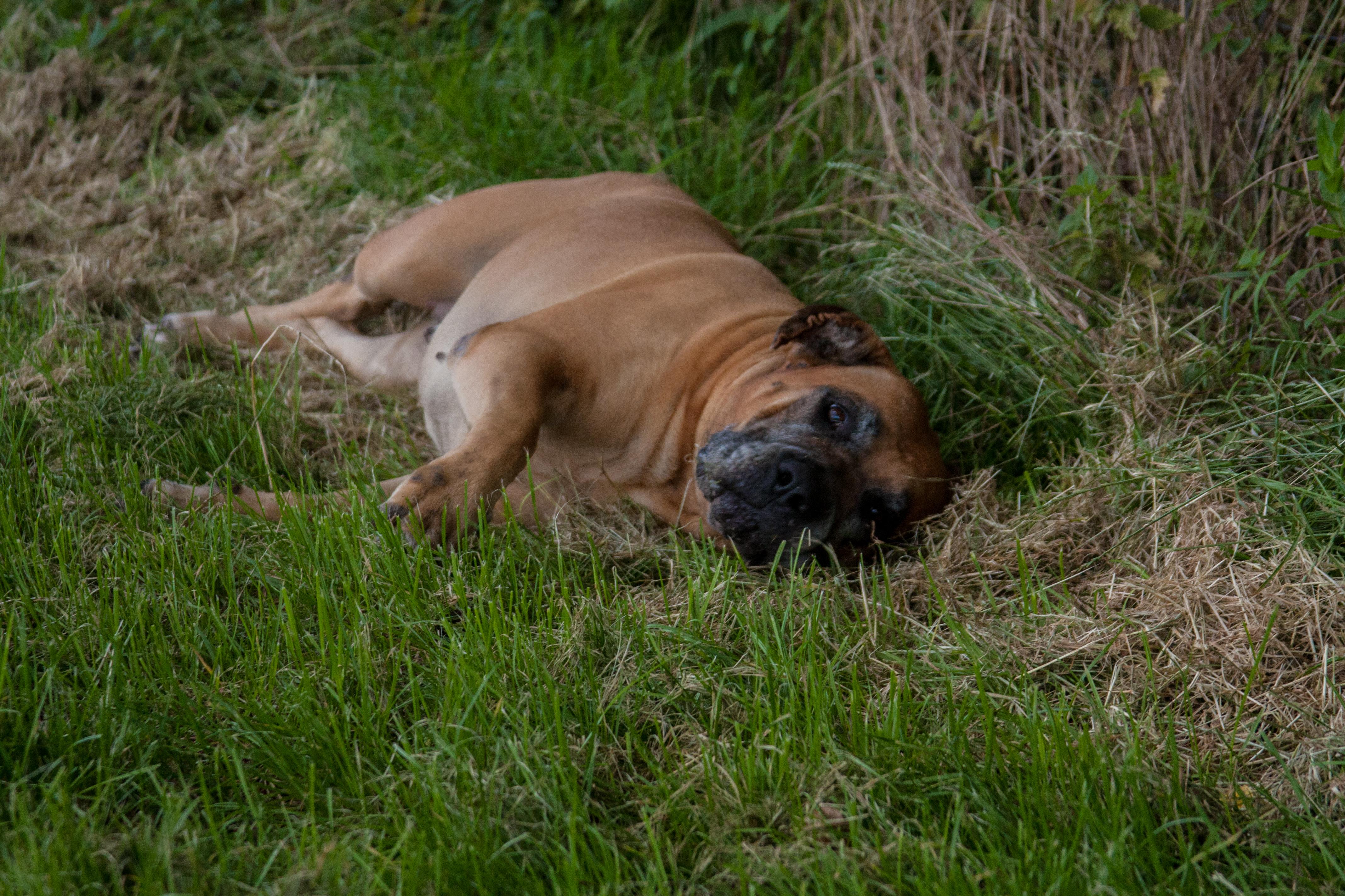 Lekker in het gras rollen zonder las te hebben van alle pollen