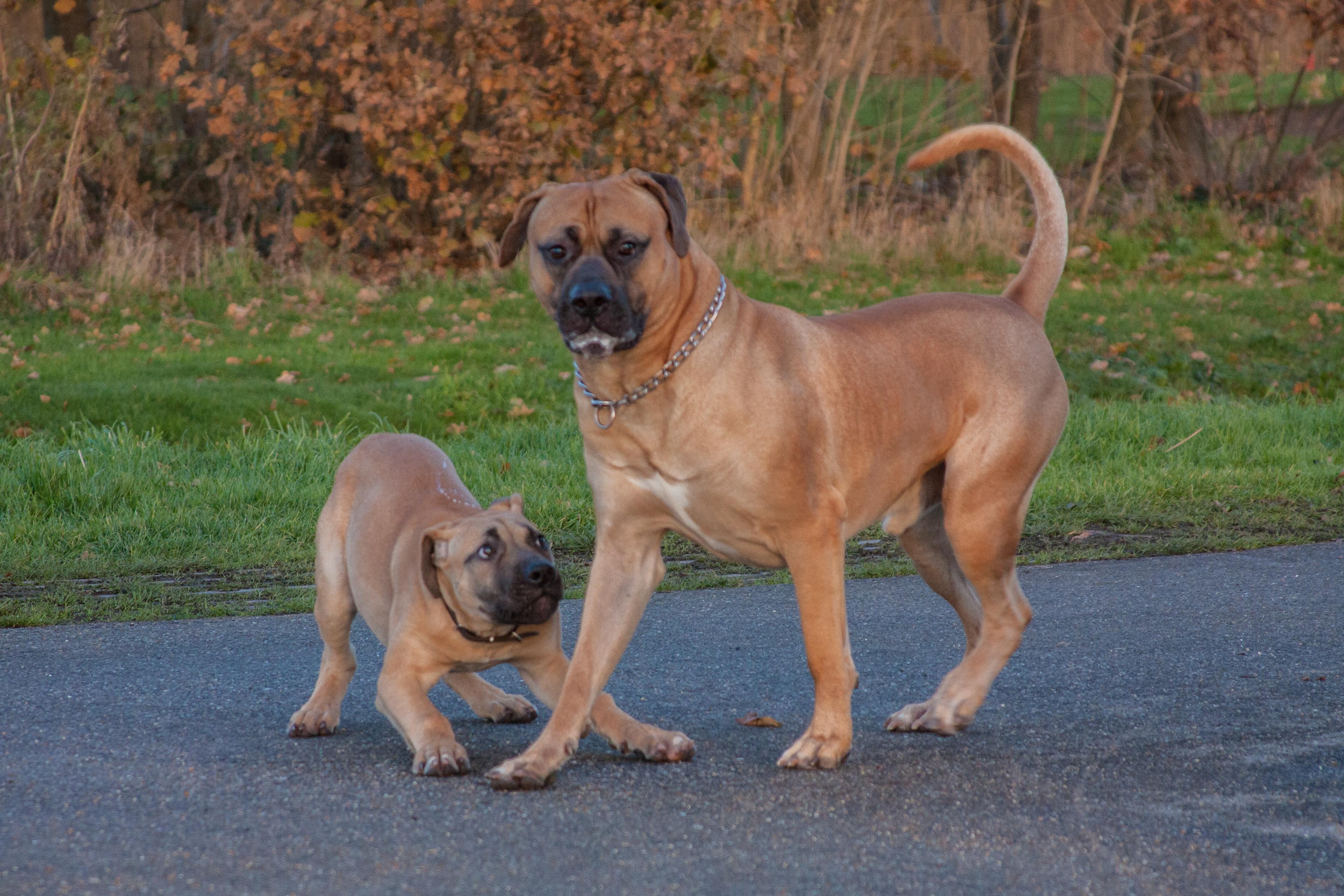Cobus met zijn grote broer Job
